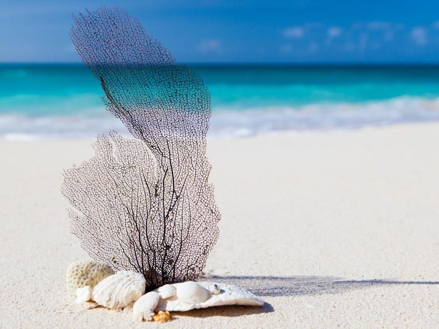 beach-845651.jpg