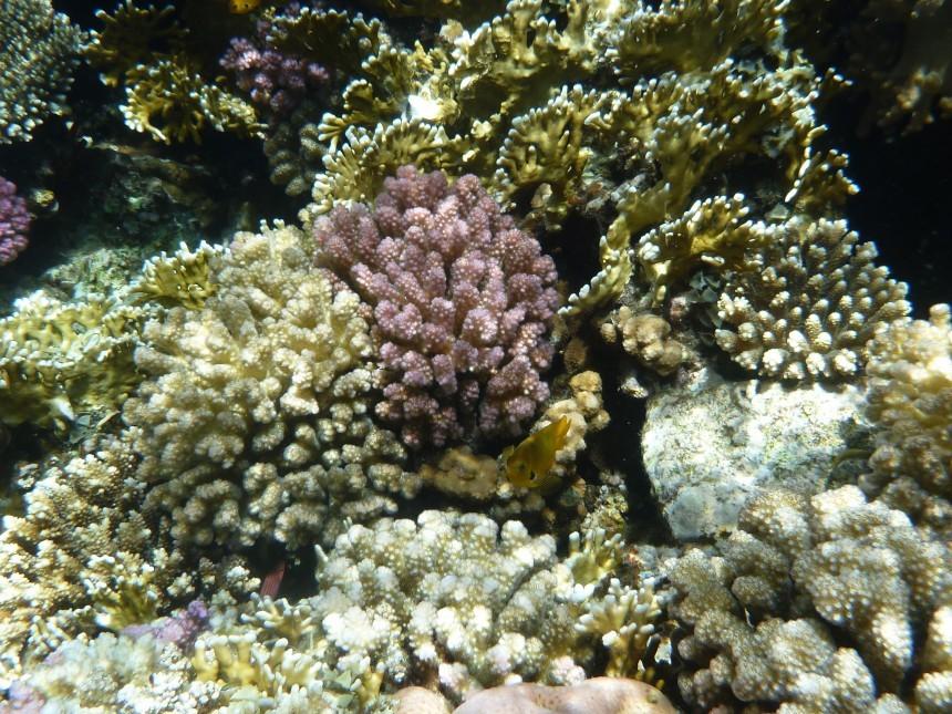 coral-223412.jpg