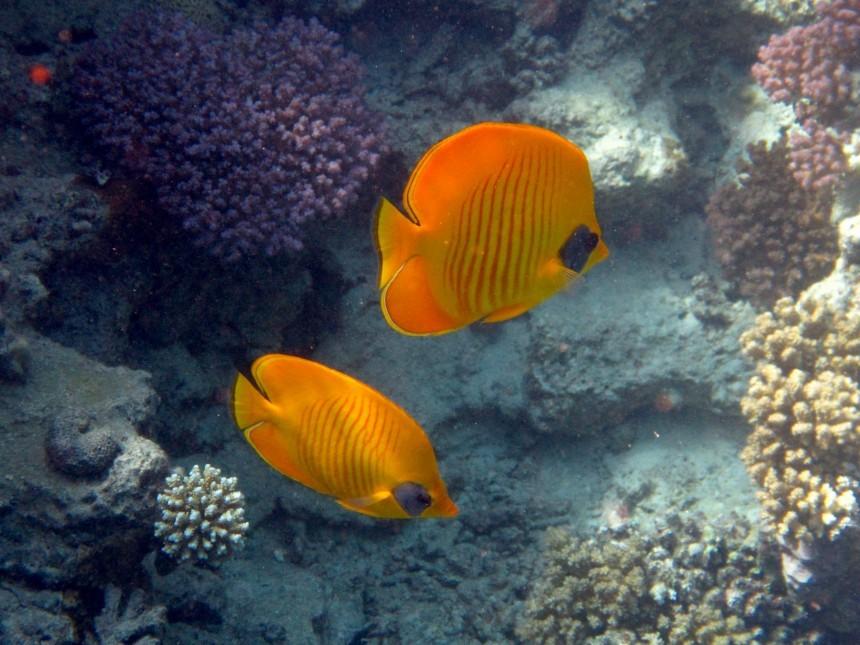 fish-1539142.jpg