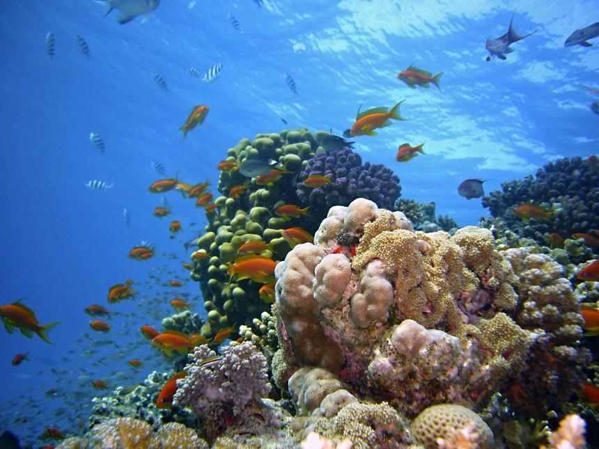 underwater-1656618.jpg