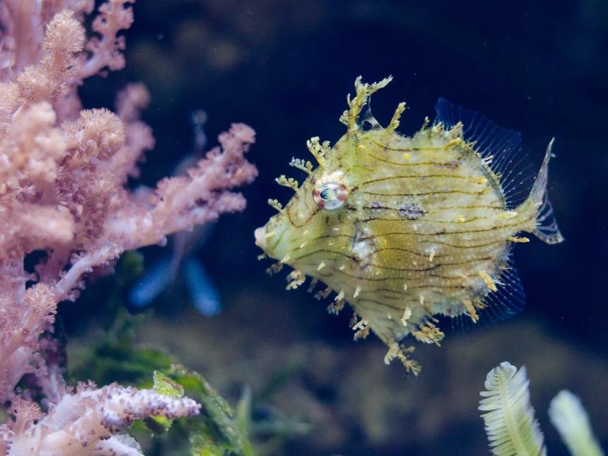 yellow-fish-13321191.jpg