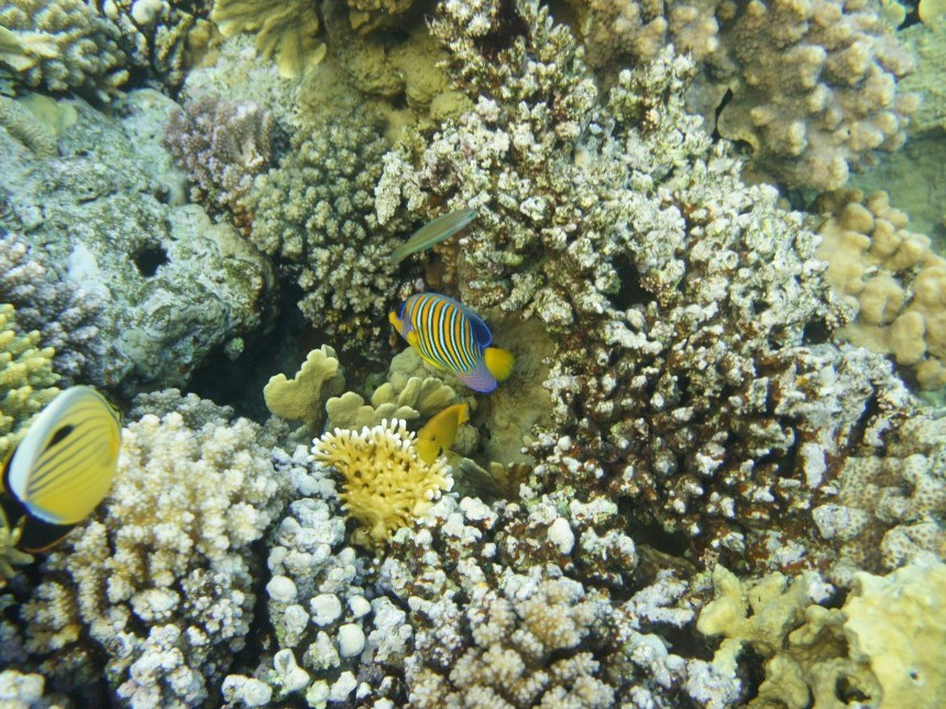 your-red-sea-1216383.jpg